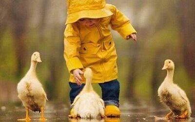 Um pato de estimação? Entenda os cuidados que deve ter.